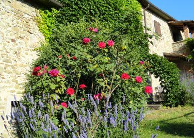 Rosen an der Ostseite